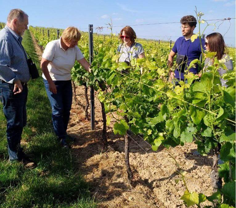 Weinwanderung am 19.Mai 2018