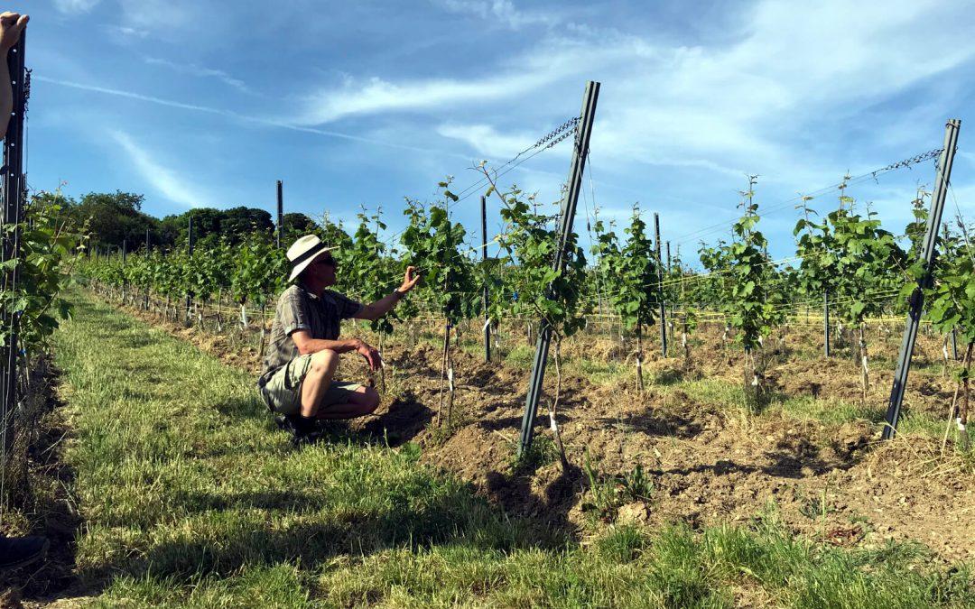 Weinsafari Juni 2019 ein Erlebnisbericht